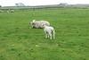 Fair_Isle_Shetland_Islands_Scotland_2019_British_Isles_0004