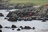 Fair_Isle_Shetland_Islands_Scotland_2019_British_Isles_0015