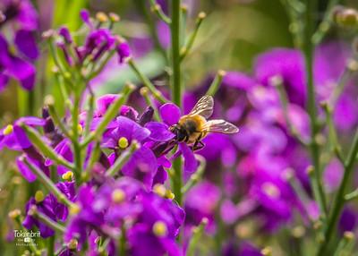 Flowers in parents Garden '17 LR-7286