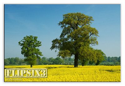 Blue, Green, Yellow.  Wistow