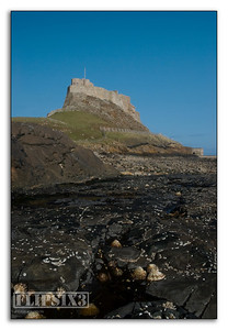 Holy Island Castle, and Limpet shells