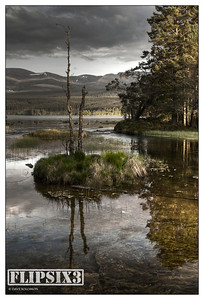 HDR shot (from 3 exposures) of a dead tree - Loch Morlich, Scotland