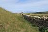 Orkney_Skara_Brae_Scotland_2019_British_Isles_0003