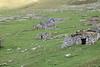 Saint Kilda_Scotland_2019_British_Isles_0009