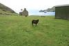 Saint Kilda_Scotland_2019_British_Isles_0006