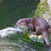 Otter 5, Thetford Breckland, March 2013.