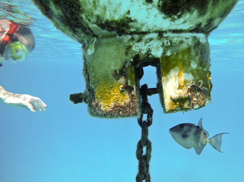 """I title this shot """"The Encounter"""" -- this is a rare sighting of a juvenile queen trigger fish (about 4.5 in.) ... who had made its home and territory the buoy.  It was not afraid at all .. just curious. I was overjoyed with this opportunity.<br /> P7000 in housing."""