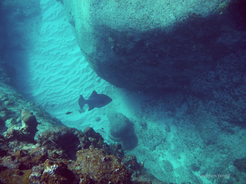 First day looking .... there is the ocean-going trigger fish in deep water