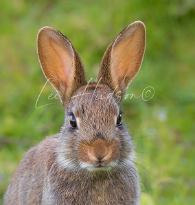 Portrait of Pretty Bunny