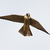 Hobby Northwood Hill October 2012