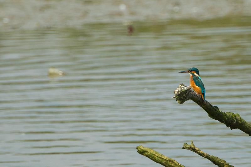 Titchfield Haven  Nature Reserve Hampshire September 2014