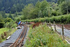 Maespoeth, looking south, Tues 23 August 2011 4.   The track at left is from the new carriage and wagon shed, sited below the running line from Corris at right.  The Corris hope to extend to Tan-y-Coed, and have launched a southern extension appeal.  The extension would give them a line over two miles long.
