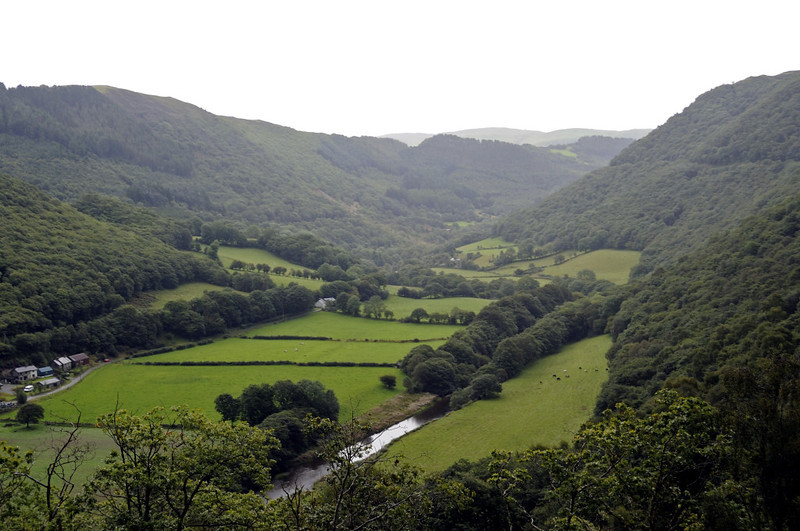 Vale of Rheidol, looking east near Rheidol Falls, Wed 24 August 2011 - 1124.  The course of the VoR can be seen cutting through the trees in the middle distance at right.