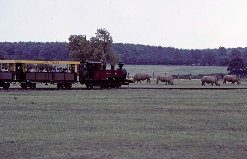 No 4 Superior, Whipsnade & Umfolozi Railway, 25 July 1976.  Cautiously passing the rhinos.  Photo by Les Tindall.