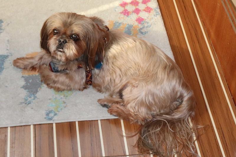 RC dog #2