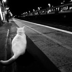 Brockley cat waiting for train BW