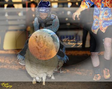Norco Ca Perf3, D1-57 ©Broda Imaging Aug'15