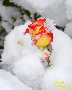 Tequila Sunrise - Early October Snow