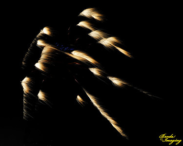 Fireworks In The Wind-85 ©Broda Imaging 2015