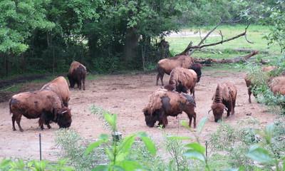bronx zoo may 28 2014