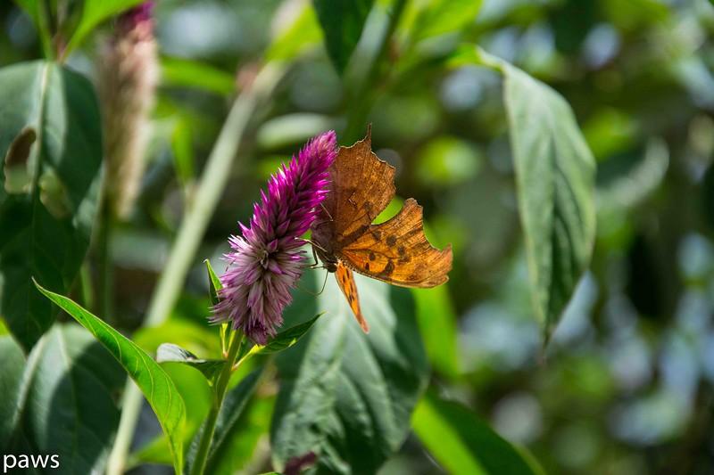 Brookgreen Gardens Butterflies