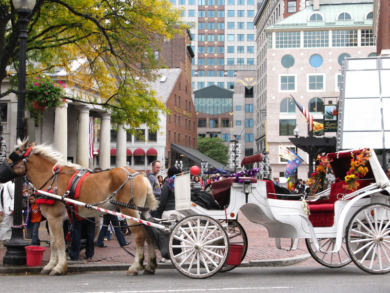 How about a romantic ride through town in a horse-drawn carriage?