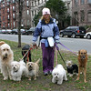 Professional dog-walker, Comm Ave Mall, Boston, January 12, 2007.