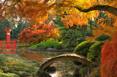 Fall In the Japanese Hill-and-Pond Garden