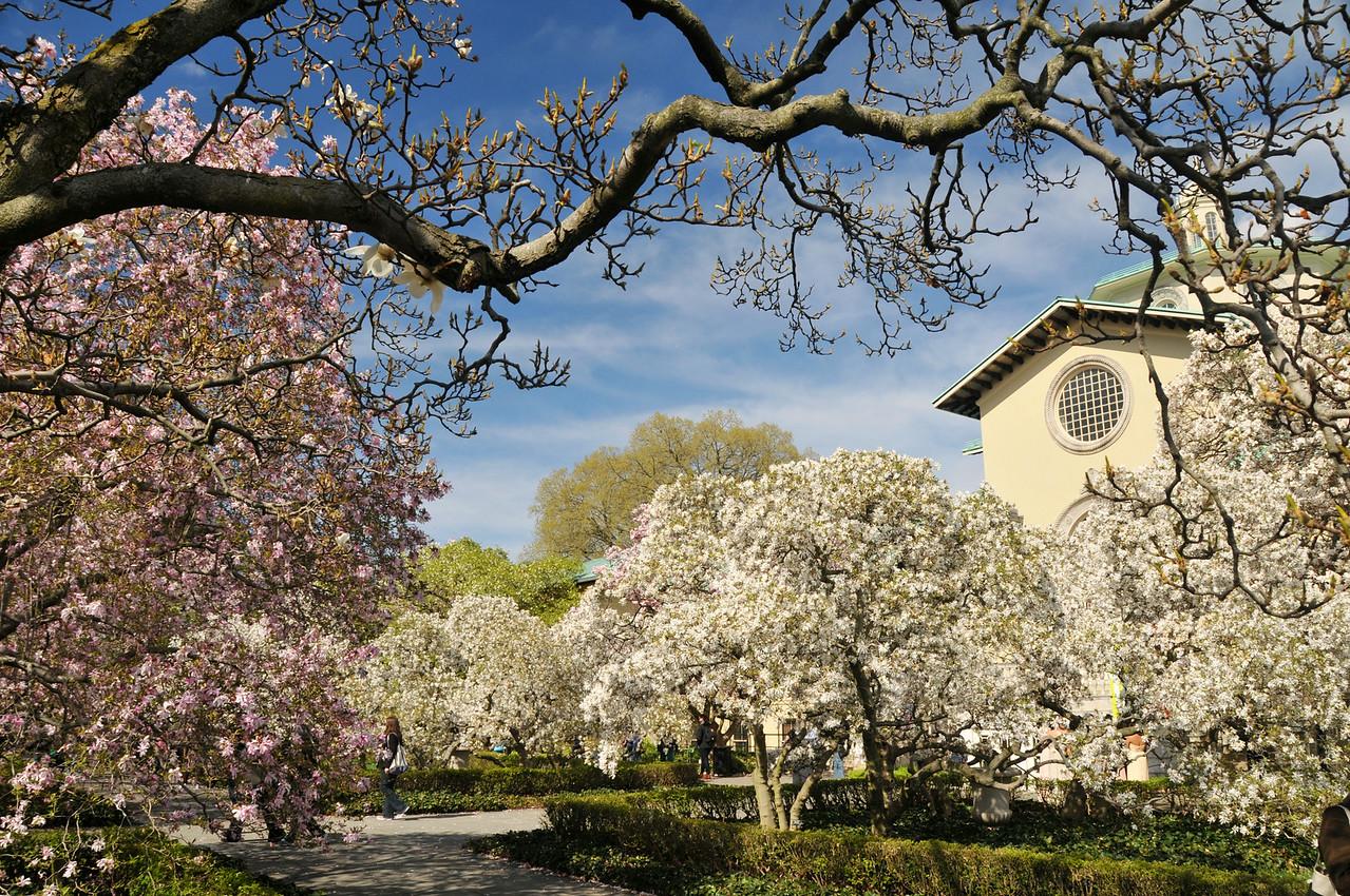 Magnolia Plaza