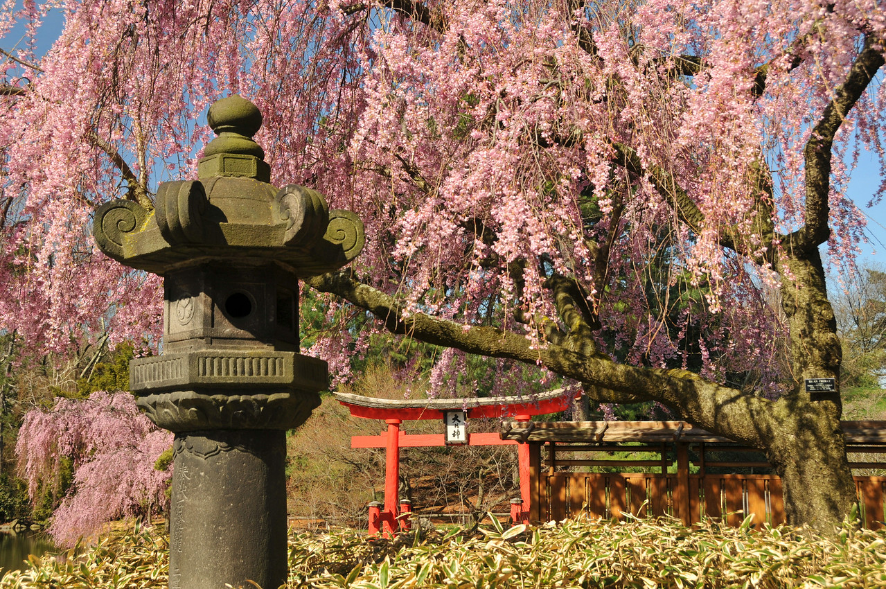 Spring In the Japanese Hill-and-Pond Garden