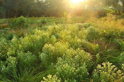 Native Flora Garden Sunset