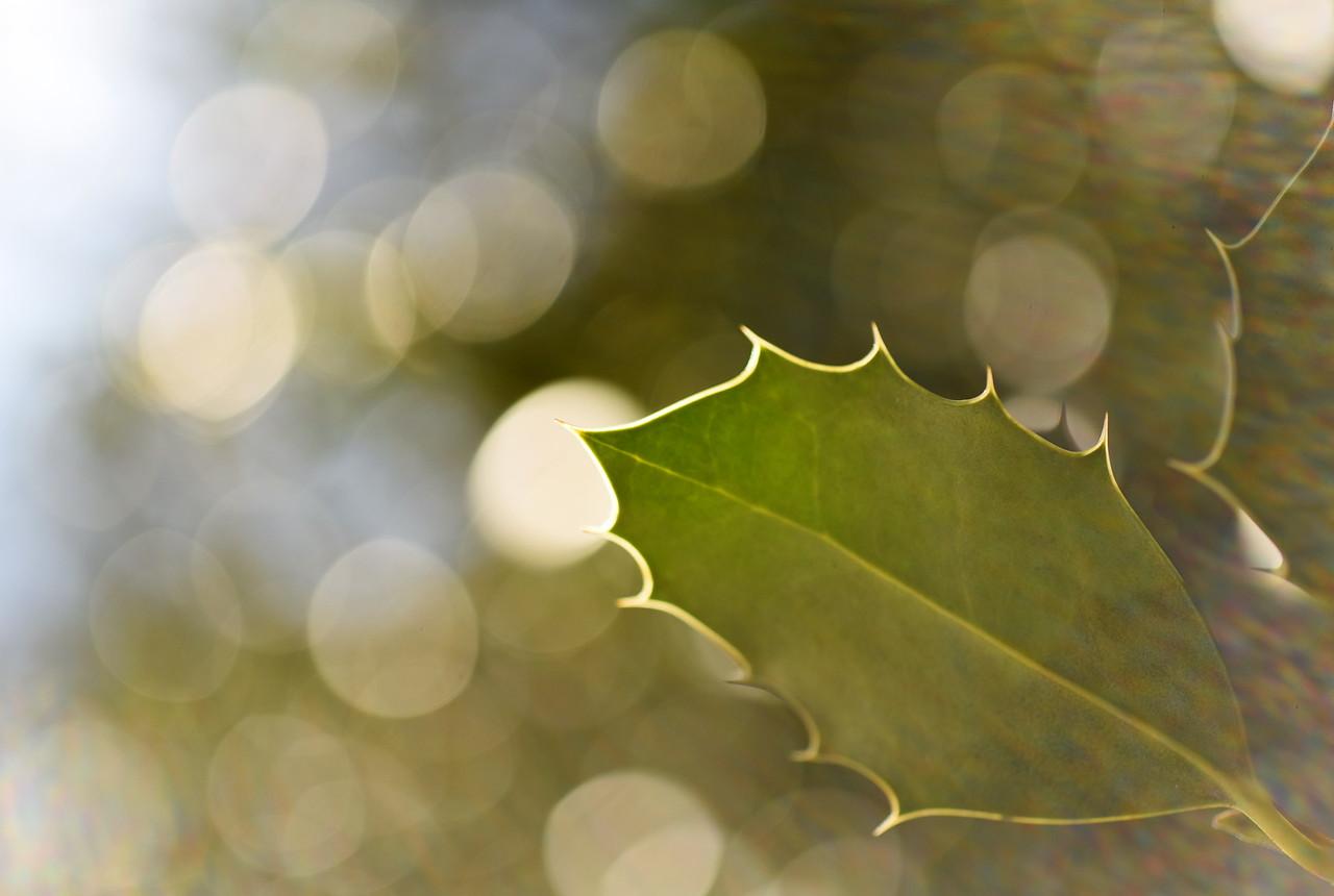 Holly In the Sun
