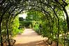Taken at Chicago Botanic Garden; example of pleaching.