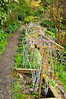 """A berry trellis at Streissguth Gardens, Seattle. The trellis is quite long. Berries in this section of the garden include loganberry, marionberry and blackcaps. <a href=""""http://www.streissguthgardens.com/short_search.asp?Origin=Bed.asp&Field=Bed&Pass_Search=27"""">http://www.streissguthgardens.com/short_search.asp?Origin=Bed.asp&Field=Bed&Pass_Search=27</a>"""