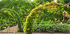 Foreground on arch:  malabar spinach.  Taken at Chicago Botanic Garden.
