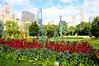 Downtown Chicago - includes swiss chard and nasturtiums. In Grant Park.