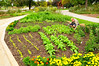 2009:  An edible garden in front of the Peggy Notebaert Nature Museum in Chicago.