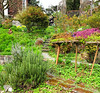 Streissguth Gardens in Seattle.  On the left is rosemary, on the right is the berry trellis.