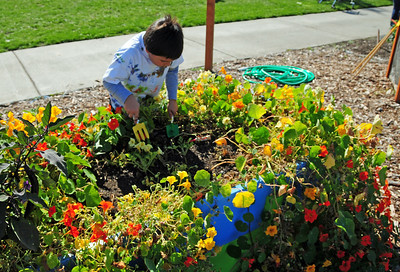 Garden planted for children in raised beds