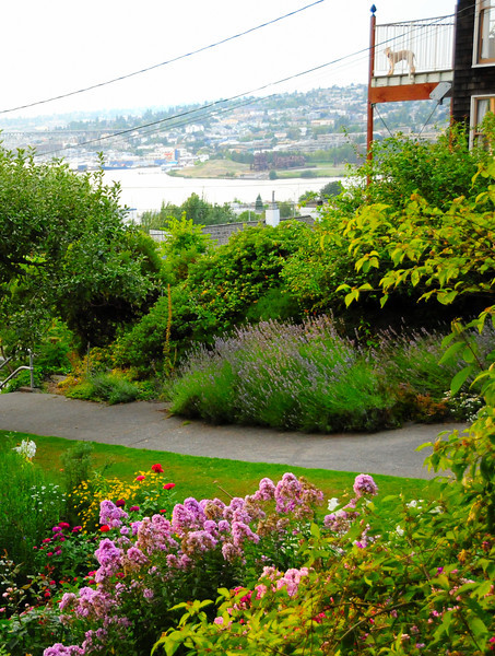 b.   Streissguth Gardens.  Includes lavender on far side of sidewalk.  Foreground includes phlox and fragrant lilies.  Catherine took photo.