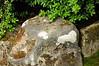 Lichen on rock - Japanese Garden