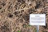 Straw mulch - Tilth