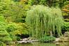 Willow - Japanese Garden