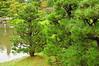 Shore Pines - Japanese Garden