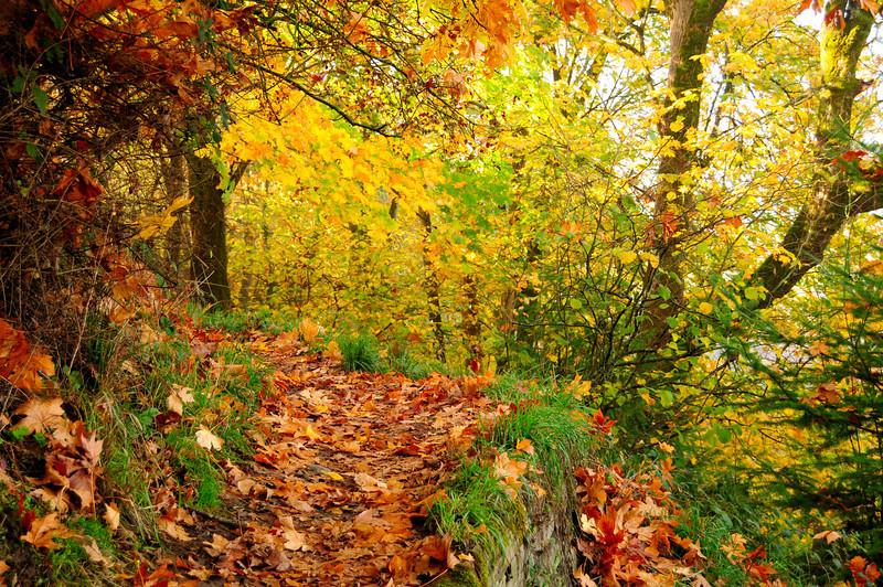 """Autumn foliage on a forest floor"" - Portland, Oregon"