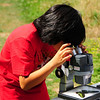 Citizen science project:  moths and butterflies through a microscope, Camp Long, Seattle.