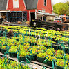 """Plants in containers at Will Allen's """"Growing Power"""" urban farm in Milwaukee, Wisconsin."""