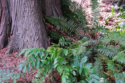 Plant List - Western Shrubs