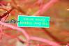 68. Cornus sericea  at Magnuson Community Garden - native plant demonstration area.