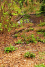 84.  Mulched bed.  Includes salal (155) - at Licton Springs Park
